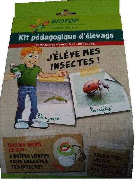 Kit pédagogique élevage Coccifly / Chrysope 1